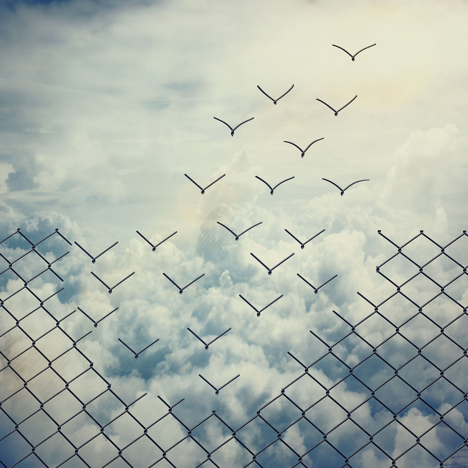 a chain link fence is set against the sky, the top links dislodging to form birds